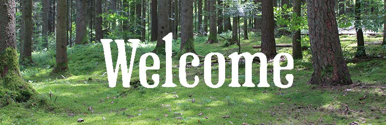 Welcome to Sussex Timber Co