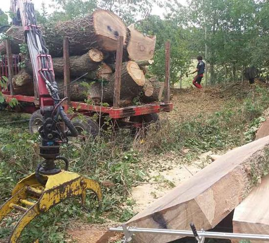 Sussex Timber co convert Oak trees into beams